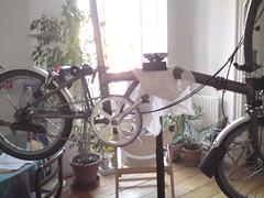 Pied d'entretien vélo........ - Page 3 4432023184_99829f7ba3_m