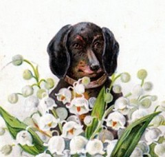 Dachshund (Svadilfari) Tags: flowers dog pet flower art animal artwork postcard canine dachshund antiquepostcard vintagepostcard whiteflowers oldpostcard