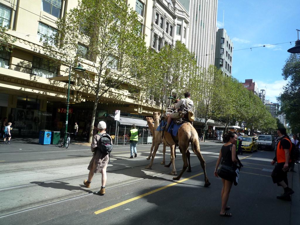 Swanston Street camels