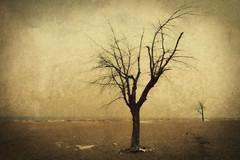 winter desert II