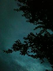 dunkleralsdienacht (Marina8791) Tags: baumm