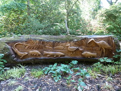 """Carvings on fallen tree • <a style=""""font-size:0.8em;"""" href=""""http://www.flickr.com/photos/61957374@N08/5853511347/"""" target=""""_blank"""">View on Flickr</a>"""