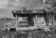 Hend.QueenIR (wmkaramjr) Tags: la moss louisiana gators bayou cajun cypresstrees acadiana henederson