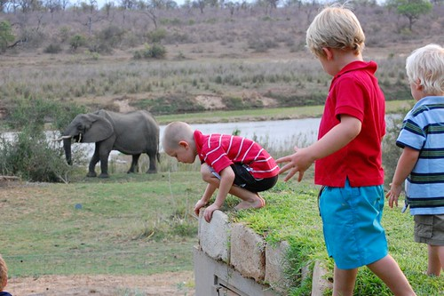 playing with elephants?