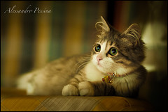 DeeDee (SuperGiovane ) Tags: cats cute animals 50mm crossprocessing didi gatto deedee canon5dmarkii