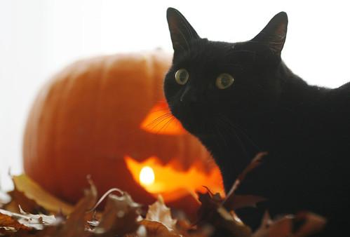 Tiny Tim, celebrity cat