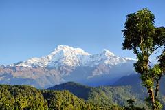Annapurna South, Annapurna I, and Hiunchuli from the Australian Camp #2 (Roantrum) Tags: nepal trek annapurna annapurnasouth hiunchuli australiancamp roantrum annapurnamassif
