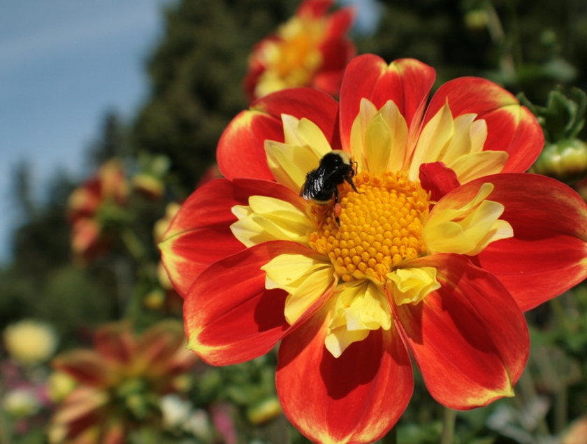 September Flower & A Bee