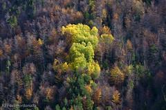 Colores (chavinandez) Tags: autumn huesca aragón losvallesoccidentales aragn fotolocus