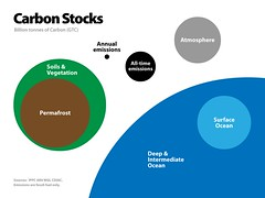 Carbon Stocks
