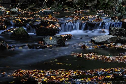 Flowing water & autumn windfalls: Todoroki Ravine, Tokyo