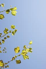 _DSC4404 (antmanzero) Tags: leaves design tress