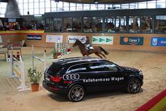 IX COPA PRESIDENTE 077 (Audi Retail Madrid S.A.) Tags: golf volkswagen caballos eos taller coche a3 tt a4 audi s3 passat a5 polo q3 a6 s4 touareg rs4 servicio a8 lupo r8 rs6 s6 phaeton sirocco touran s8 accesorios mecanico tcnico q7 q5 vehculo hipica allroad concesionario ocasion recambios tiguan seminuevos