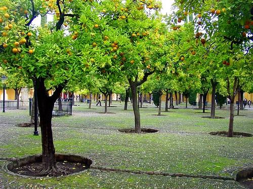 Patio de los Naranjos, Mezquita de Córdoba.