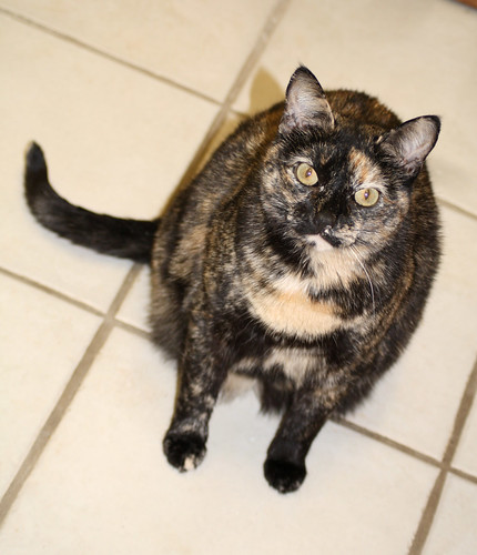 hexbug-cat