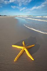 Yellow (john white photos) Tags: sea beach waves starfish clean environment johnwhitegettyimages