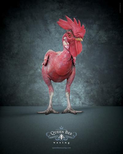 Queen Bee Waxing - Rooster