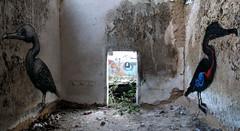 urbex art Ghent : Roa (_Kriebel_) Tags: street art graffiti belgium belgique belgi ghent gent gand urbain roa kriebel roabot
