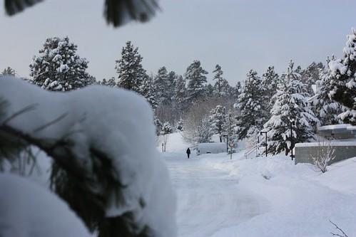 Snow Scene 23Dec09