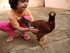 c ? (Tiago LoRo) Tags: galinha sitio galinheiro