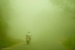 Misty Road (Arvind ( www.dreamexposures.com )) Tags: vacation india nature fauna flora south kerala incredible thekkady munnar malayalam kumarakom december2009