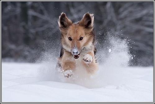 SAM-im-Schnee