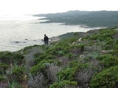 Le sentier vers la tour de Santa Manza après les plages : vue vers le Sud