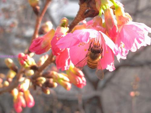 katharine娃娃 拍攝的 2蜂採蜜。