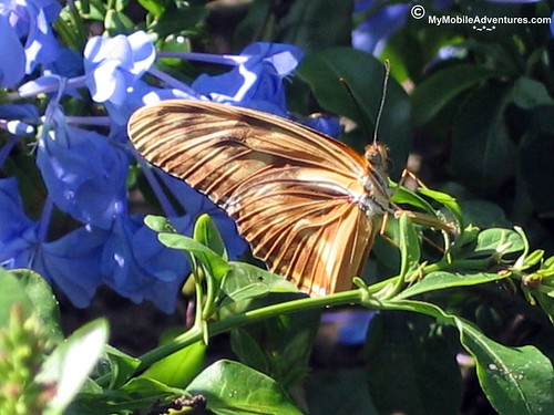 IMG_0638-WDW-EPCOT-butterfly