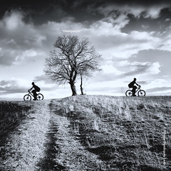 Divergencia - Unreal Photo Project (Alfonso Domnguez Lavn) Tags: light bw sun white black tree blanco luz sol composition de landscape arbol amazing spain nikon all y negro bicicleta paisaje bn valladolid leon rights silueta reserved silohuette bycicle castilla composicion copyrighted fotografos nd400 d90 gnd8 nikond90 wwwalfonsodominguezes alfonsodominguez