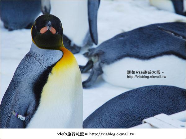【via關西冬遊記】大阪海遊館~冬季限定!無敵可愛企鵝遊行來囉!2