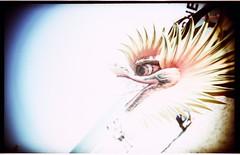 kepalanaga (mukakocak) Tags: kite festival 2010 balikpapan