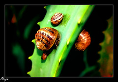 Mollusk eyes (Mohammad Reza Hassani) Tags: lebanon green eye insect beirut mollusk چشم برگ حلزون