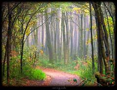 Morgendunst - morning walk (NPPhotographie) Tags: wood morning mist tree nature fog forest germany way path magic cologne dust mywinners theunforgettablepictures naturewatcher artofimages bestcapturesaoi elitegalleryaoi wonderworldgallery masterclasselite