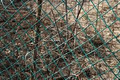 garden fence 030