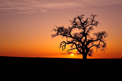 Tree (Beau Hause) Tags: blue sunset orange sun tree night lens landscape photography long branches beau hause roseville d700