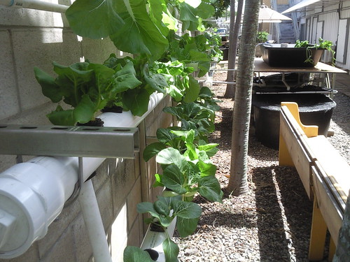 Indoor Aquaponics Systems Can You Build Your Own At Home