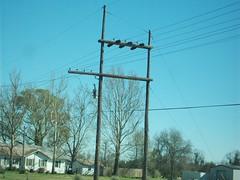 34.5kv H-Frame deadend (dphinton2003) Tags: powerlines