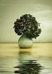Dead hydrangea flower (louisahennessysuou) Tags: reflection flood vase hydrangea hortensia flamingpear 78365 ppt3652010