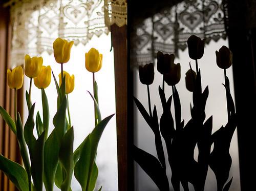 tulip diptych