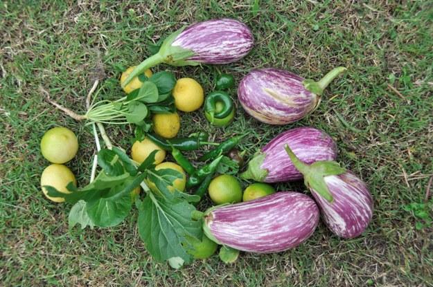 March garden bounty