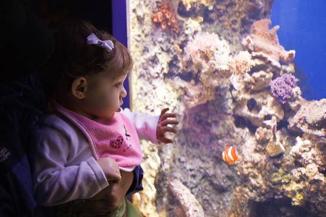 Ella found Nemo