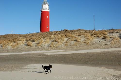 Baloo in spiaggia