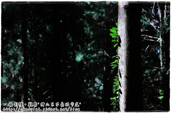 20100410_514