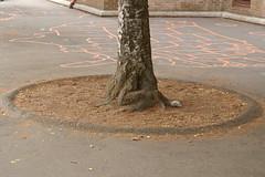 treeMite