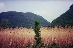 (barbieri simone) Tags: film olympustrip35 simonebarbieri 35mm 2011 analog archive