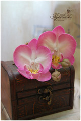 Orchid Phalaenopsis (RykhlinskaARTstudio) Tags: handmade decoration coldporcelain clayflowers lunaclay thaiclay