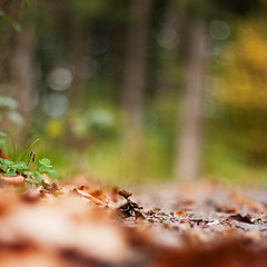 from a frogs point of view. (Enzaa ...) Tags: autumn fall leaves rural canon square eos 50mm prime photo europe sweden bokeh naturallight canonef50mmf14usm 400d bokehlicious canoneos400d fromafrogspointofview
