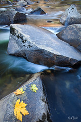 fall reflections ([Adam Baker]) Tags: autumn reflection fall nature leaves vertical canon river landscape nationalpark rocks long exposure merced yosemite cascades portfolio 1740l adambaker 5dmarkii