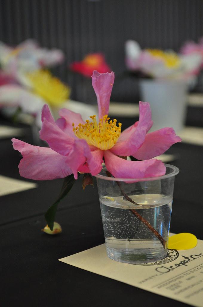 Camellia Show 5